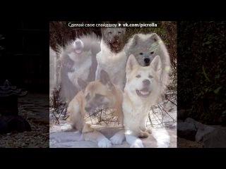 «Со стены Охотничьи лайки!» под музыку Ляпис Трубецкой - Села батарейка. Picrolla
