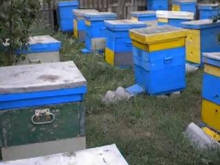Последний отбор мёда произведён