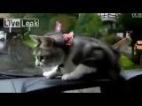 Смешная реакция кота :))