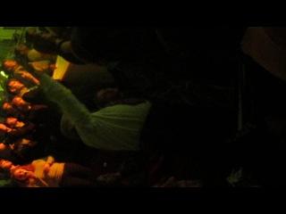 Дедушка лет 80 отжигает на прощальном концерте 01.12. группы Король и Шут.