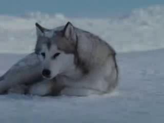Wolf melodies