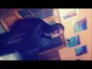 ABIB ft. M_eech - Поздравление для РэпФромЮкрэйн