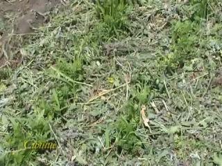Мульчирование. Что такое мульчирование почвы. Как мульчировать почву