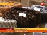 Белорусские Валенки на украинском телеканале СТБ