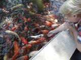 Рыбки у входа в аквариум Вашку да Гама. Лиссабон.