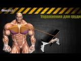 Как накачать грудные мышцы (упражнения и особенности) Фитоняшки, бикини, бикинистки, бикини, фитнес, fitnes, бодифитнес, фитнесс, silatela, Do4a, бодибилдинг, пауэрлифтинг, качалка, тренировки, трени, тренинг, упражнения, фитнесу, бодибилдингу, накачать, качать, кач, прокачать, сушка, массу, набрать, скинуть, подсушить, тело, сила, тела, силатела, sila, tela, упражнение, ягодиц, рук, ног, пресса, трицепса, бицепса, крыльев, трапеций, предплечий, ЗОЖ СПОРТ МОТИВАЦИЯ