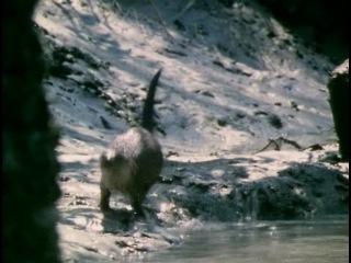9 of 12 - / BBC: Живая планета. Побережья / The Living Planet / 1984