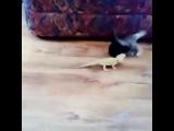 Lizard scares cat