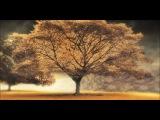 Араш и Хелена-Broken_Angel.HDvideo