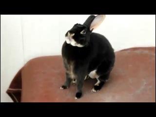 смешные животные кролик заяц орёт бешеный как