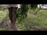 Как собирают мёд диких пчёл в африке