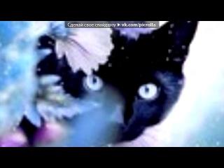 «животные» под музыку Шедевры Инструментальной Музыки - В мире животных [Все домашние и дикие животные]. Picrolla