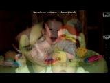 «наш любимый сынуля!!!!!!» под музыку Ия - Берегите своих детей. Picrolla