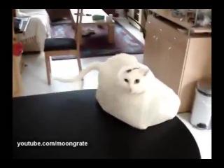 Кошачье любопытсво 1