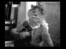 Микки Маус ударяется головой о ступеньку и бьётся в агонии, а Кот играет на виолончели.
