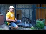 №5. Приучение щенка к вольеру. Первые шаги.