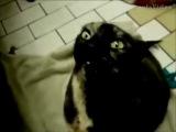 Очень смешные говорящие коты - Смешно до слез!