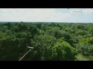 Переломный момент Леса Амазонии