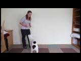 Глухая собака по кличке Хорус