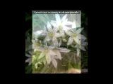«цветы» под музыку Поль Мариа - Весенний вальс. Picrolla