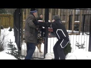 Охрана приусадебного участка двумя собаками