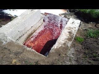 жесть, порно, анал, насилие, прикол,ржака, нагайбакский район село фершампенуаз. гавно течет в реку убойный цех птицефабрики СИТНО