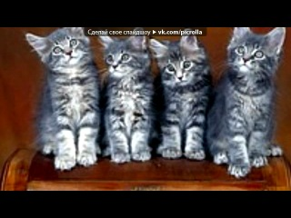 «котята» под музыку Киса и Котэ - Мяу-Мяу. Picrolla