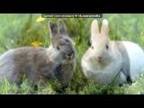 «Основной альбом» под музыку Бешеные Кролики))) - La Bamba. Picrolla