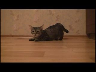 турбо кот