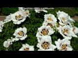 БОТАНИЧЕСКИЙ САД под музыку Феликс Мендельсон (1809-1847). Пьесса для струнного квартета. Исп. Emerson String Quartet - Capricco E minor, op.81 №3. Picrolla
