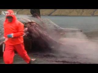 Взрывоопасный кит