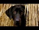 «собаки» под музыку Хатико,к/ф - Очень красивая мелодия - Моцарт.