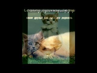 «*** В мире животных...***» под музыку ЧУЖИЕ - Кошки. Picrolla