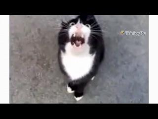 Может вы знаете, где то, что ищет этот котэ?