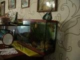 Мой попугай купается в аквариуме)))