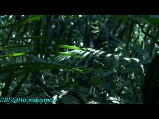 BBC: Живой мир: Тайны Тихого океана. Океан островов (2009)