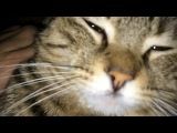 Admin iphone 5s video