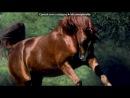 """«лошади» под музыку Enigma - Песня о хаски (из фильма """"белый плен""""). Picrolla"""