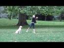 Собака в Гайд-парке.