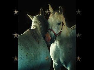 Баллада о лошадях