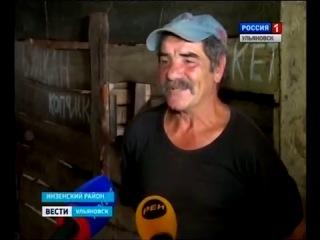 першероны КФХ КузнецовС.А.