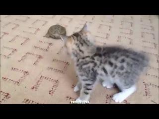 кот и черепаха