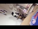 Мои бешеные коты
