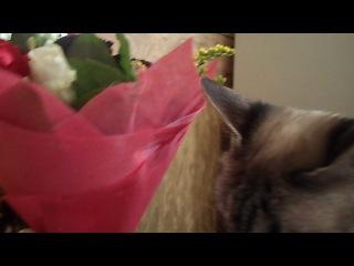 Таисия трогает цветы и кусает упаковку.Все в лучших традициях)