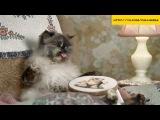 Прикольная реклама молока ==Kisa Smile== Прикольные фото и видео с кошками