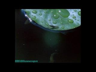BBC «Живая планета. Портрет Земли (08) - Сладкая свежая вода» (Документальный, 1984)