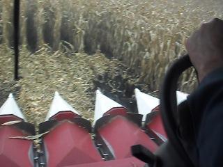 уборка кукурузы в селе Атемар на комбайне  Acros 530 и Acros580