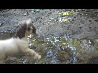 Прогулка по ручью :D