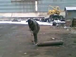 Любопытный мужик пытается открыть баллон с углекислотой