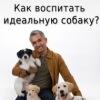 """""""Как воспитать идеальную собаку"""" Цезарь Миллан"""
